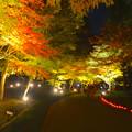 写真: 東山植物園 紅葉ライトアップ 2013 No - 098