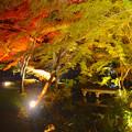 写真: 東山植物園 紅葉ライトアップ 2013 No - 106