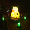 写真: 東山植物園 紅葉ライトアップ 2013 No - 114:「ズーボ」のイルミネーション