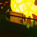写真: 東山植物園 紅葉ライトアップ 2013 No - 115:「ズーボ」のイルミネーション