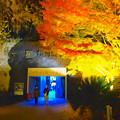 写真: 東山植物園 紅葉ライトアップ 2013 No - 117