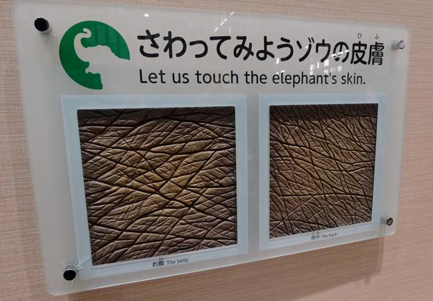 新アジアゾウ舎「ゾージアム」No - 074:象の皮膚