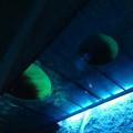 写真: 東山動植物園 星が丘門の畜光ライトアップ No - 4
