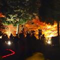 写真: 東山植物園 紅葉ライトアップ 2013 最終日 No - 05