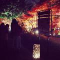 Photos: 東山植物園 紅葉ライトアップ 2013 最終日 No - 15