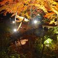 写真: 東山植物園 紅葉ライトアップ 2013 最終日 No - 19