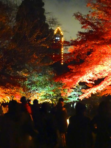 写真: 東山植物園 紅葉ライトアップ 2013 最終日 No - 22