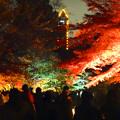 Photos: 東山植物園 紅葉ライトアップ 2013 最終日 No - 22