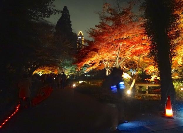 Photos: 東山植物園 紅葉ライトアップ 2013 最終日 No - 23