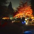 写真: 東山植物園 紅葉ライトアップ 2013 最終日 No - 23