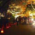 写真: 東山植物園 紅葉ライトアップ 2013 最終日 No - 28