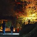 写真: 東山植物園 紅葉ライトアップ 2013 最終日 No - 39