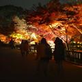 写真: 東山植物園 紅葉ライトアップ 2013 最終日 No - 40