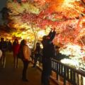 写真: 東山植物園 紅葉ライトアップ 2013 最終日 No - 42