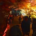 写真: 東山植物園 紅葉ライトアップ 2013 最終日 No - 55