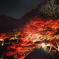 写真: 東山植物園 紅葉ライトアップ 2013 最終日 No - 53