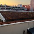 写真: 星ヶ丘テラスEASTの屋根の上に植えられてる植物? - 1