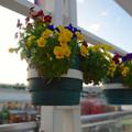 写真: 星ヶ丘テラスに飾られていた花(背景ぼかしモード)