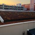 写真: 星ヶ丘テラスEASTの屋根の上に植えられてる植物? - 2