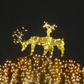 写真: ノリタケの森のクリスマスイルミネーション 2013 No - 40:トナカイのイルミネーション