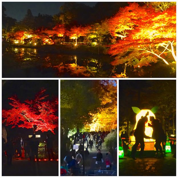 写真: 東山植物園 紅葉ライトアップ 2013:まとめ