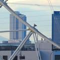 写真: シートレインランドの大観覧車越しに見た、名駅ビル群 - 2