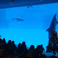 写真: イルカ水槽とクリスマスツリー