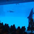 Photos: イルカ水槽とクリスマスツリー