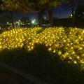写真: ガーデンふ頭臨港緑園のクリスマスイルミネーション 2013 No - 2