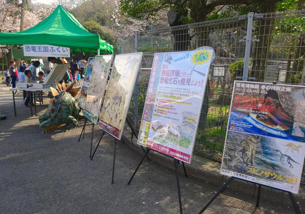 東山動植物園 春まつり 2014:福井県立恐竜博物館のPRブース - 01