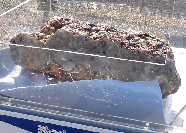 東山動植物園 春まつり 2014:福井県立恐竜博物館のPRブース - 04