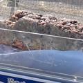 Photos: 東山動植物園 春まつり 2014:福井県立恐竜博物館のPRブース - 04