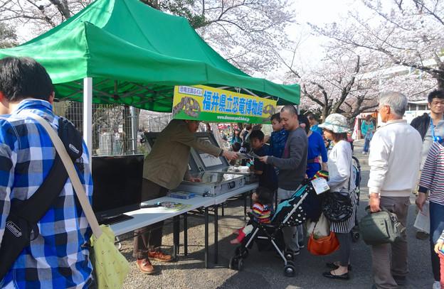 東山動植物園 春まつり 2014:福井県立恐竜博物館のPRブース - 05