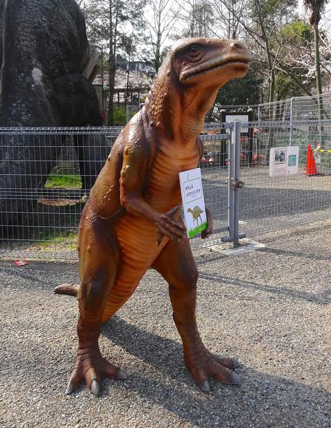 東山動植物園 春まつり 2014:福井県立恐竜博物館のPRブース - 08