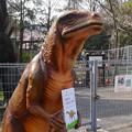 Photos: 東山動植物園 春まつり 2014:福井県立恐竜博物館のPRブース - 09