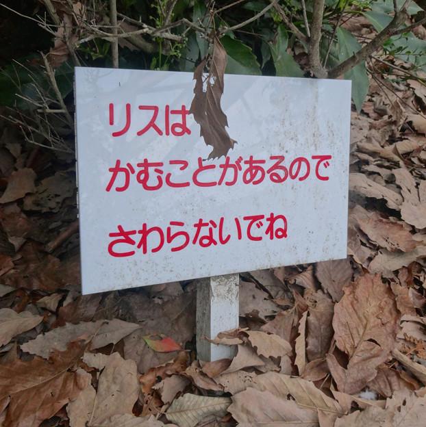 東山動植物園 小鳥とリスの森 No - 02:リスに対する注意書き