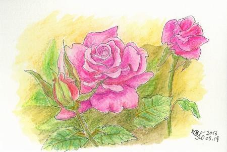 20130519福山のバラ