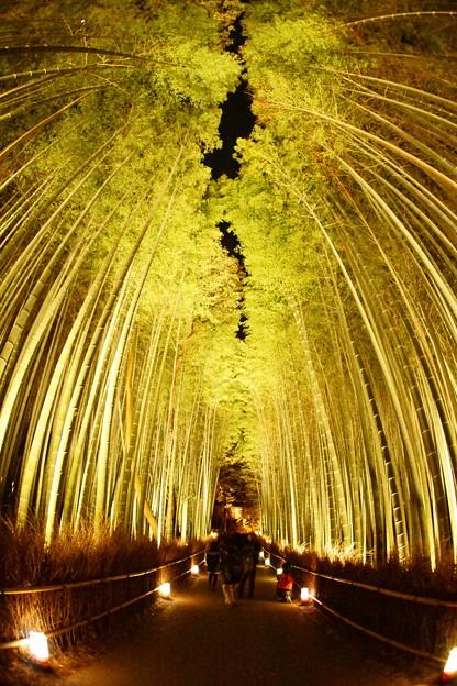 嵐山 花灯路