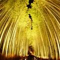 Photos: 嵐山 花灯路