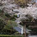 椿園正門前