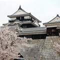 桜に囲まれた天守閣