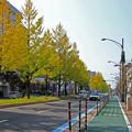 銀杏並木の在る街