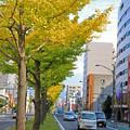 銀杏並木の街