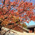 色ずく桜の二ノ丸