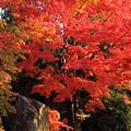 史跡庭園の紅葉