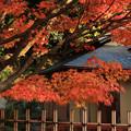 二ノ丸庭園の紅葉