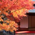 茶室と紅葉