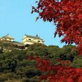 松山城の在る紅葉