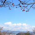 梅のある道後平野