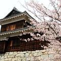 桜のあるお城